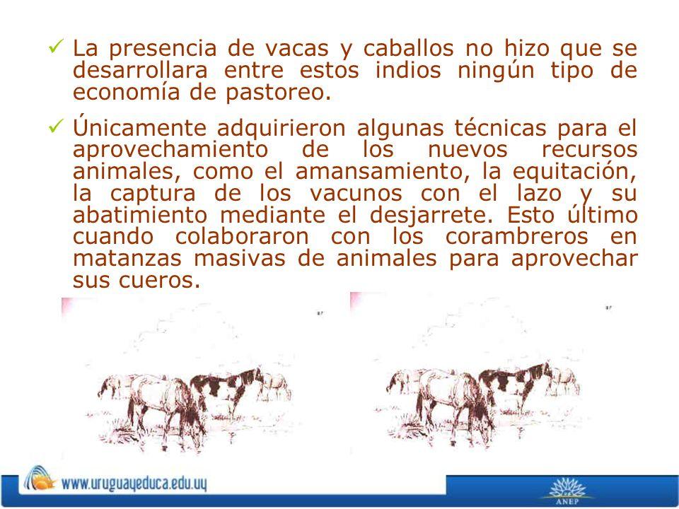 La presencia de vacas y caballos no hizo que se desarrollara entre estos indios ningún tipo de economía de pastoreo. Únicamente adquirieron algunas té