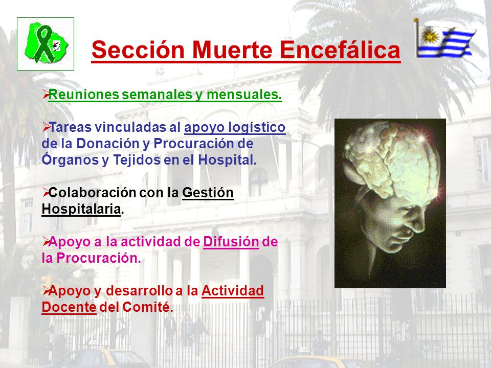 Sección Muerte Encefálica Reuniones semanales y mensuales. Tareas vinculadas al apoyo logístico de la Donación y Procuración de Órganos y Tejidos en e