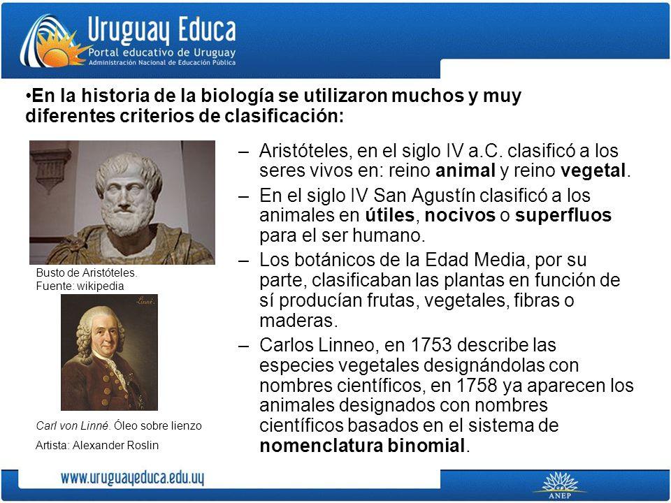 –Aristóteles, en el siglo IV a.C. clasificó a los seres vivos en: reino animal y reino vegetal. –En el siglo IV San Agustín clasificó a los animales e