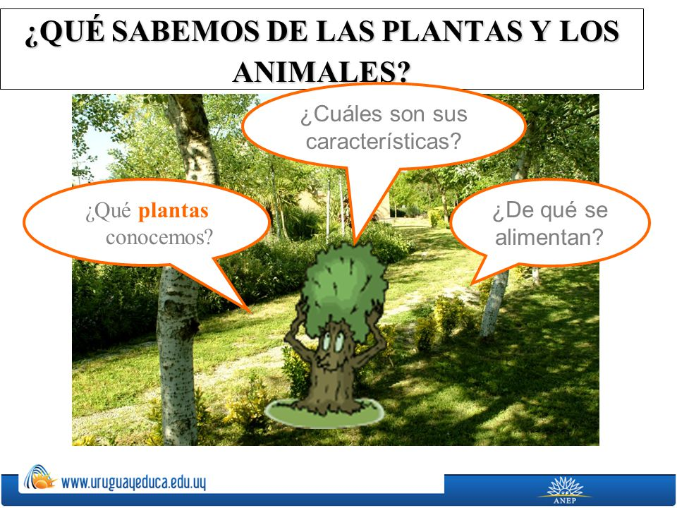 ¿QUÉ SABEMOS DE LAS PLANTAS Y LOS ANIMALES? ¿De qué se alimentan? ¿Cuáles son sus características? ¿Qué plantas conocemos?