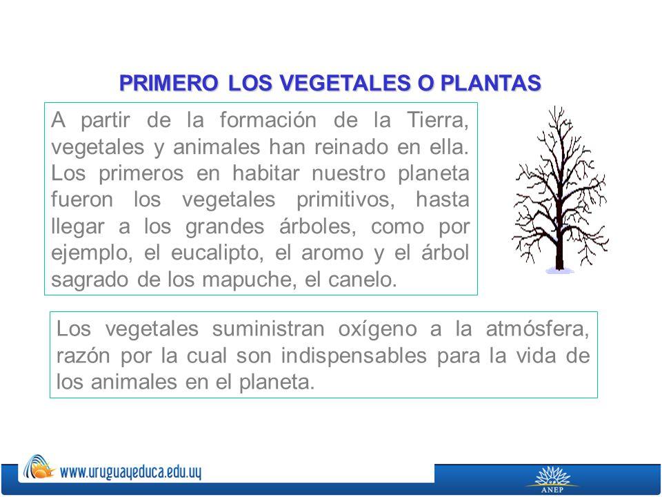 A partir de la formación de la Tierra, vegetales y animales han reinado en ella. Los primeros en habitar nuestro planeta fueron los vegetales primitiv