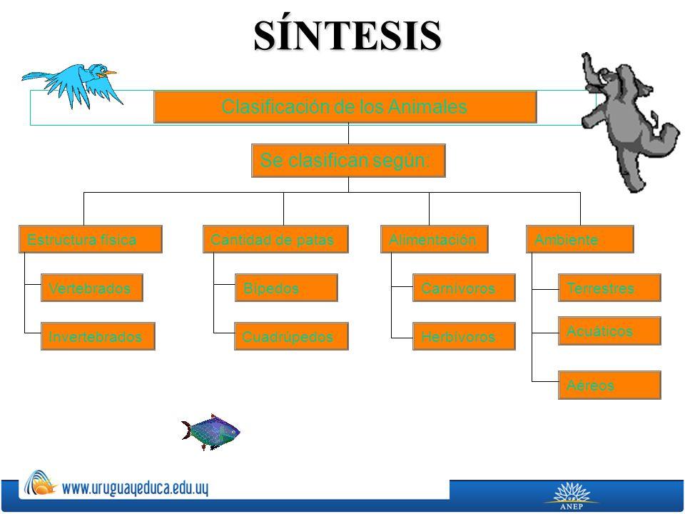 SÍNTESIS Clasificación de los Animales Estructura física Se clasifican según: AlimentaciónCantidad de patasAmbiente Vertebrados Invertebrados Bípedos Cuadrúpedos Carnívoros Herbívoros Terrestres Acuáticos Aéreos