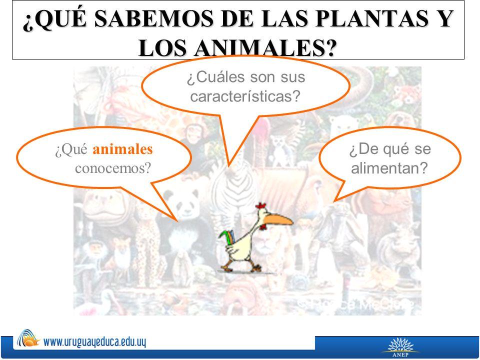 ¿QUÉ SABEMOS DE LAS PLANTAS Y LOS ANIMALES? ¿De qué se alimentan? ¿Cuáles son sus características? ¿Qué animales conocemos?