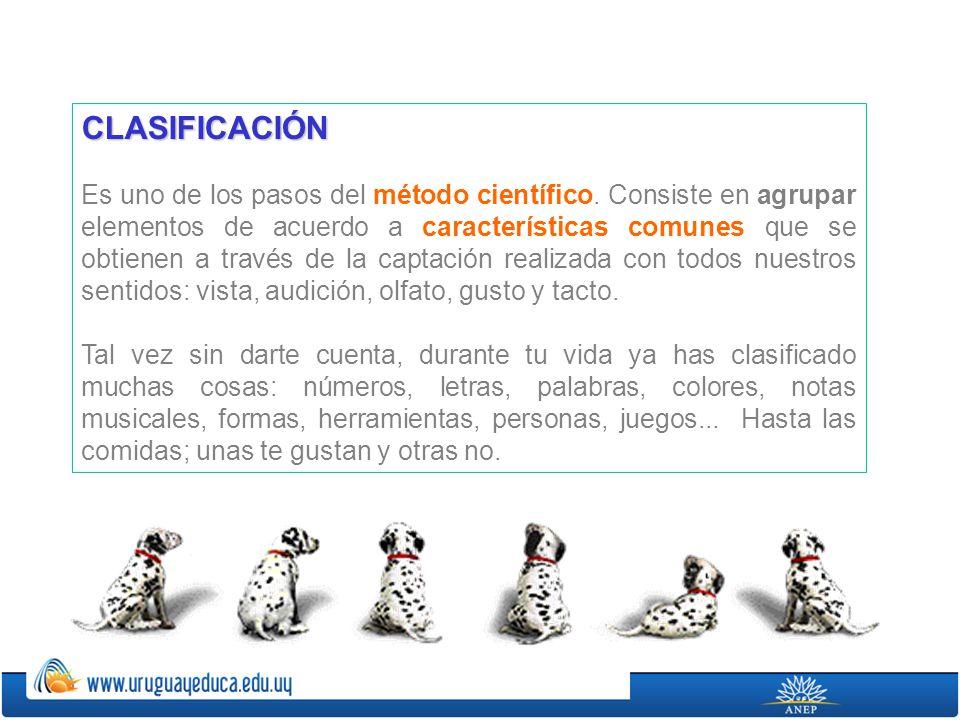 CLASIFICACIÓN Es uno de los pasos del método científico. Consiste en agrupar elementos de acuerdo a características comunes que se obtienen a través d