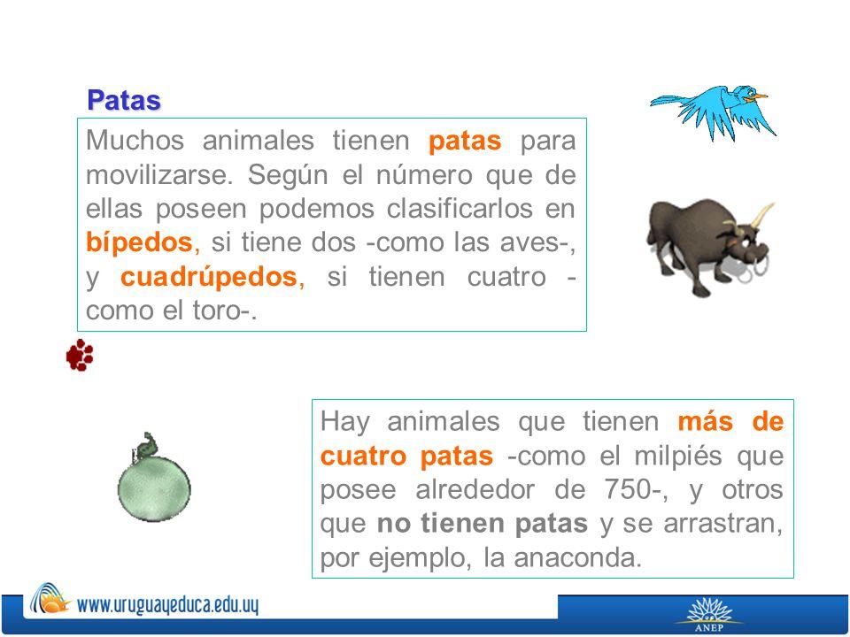 Muchos animales tienen patas para movilizarse.