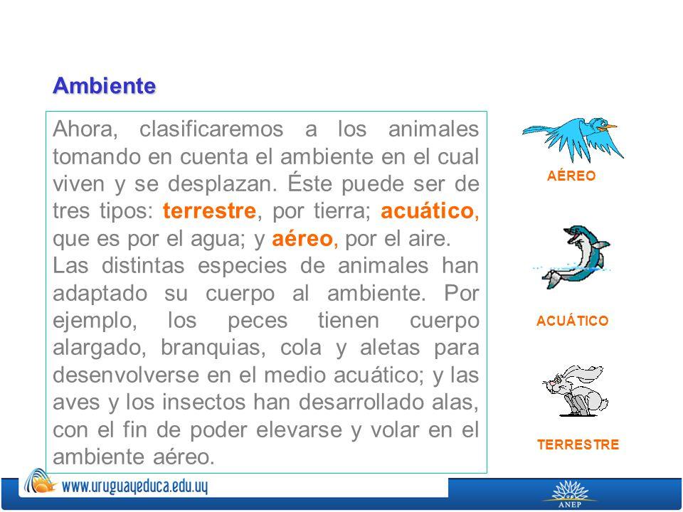Ahora, clasificaremos a los animales tomando en cuenta el ambiente en el cual viven y se desplazan. Éste puede ser de tres tipos: terrestre, por tierr