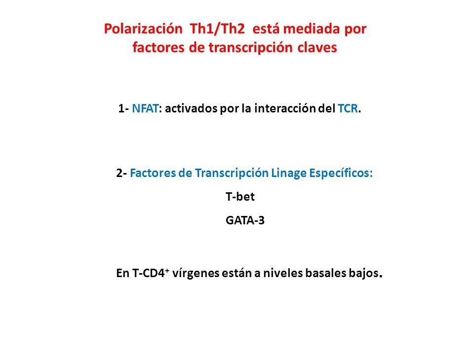Polarización Th1/Th2 está mediada por factores de transcripción claves 1- NFAT: activados por la interacción del TCR. 2- Factores de Transcripción Lin