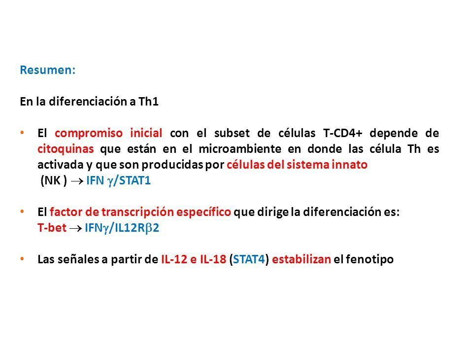 Resumen: En la diferenciación a Th1 El compromiso inicial con el subset de células T-CD4+ depende de citoquinas que están en el microambiente en donde