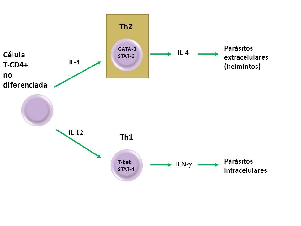 Célula T-CD4+ no diferenciada IL-4 IL-12 Th2 GATA-3 STAT-6 IL-4 IFN- Parásitos extracelulares (helmintos) Th1 T-bet STAT-4 Parásitos intracelulares