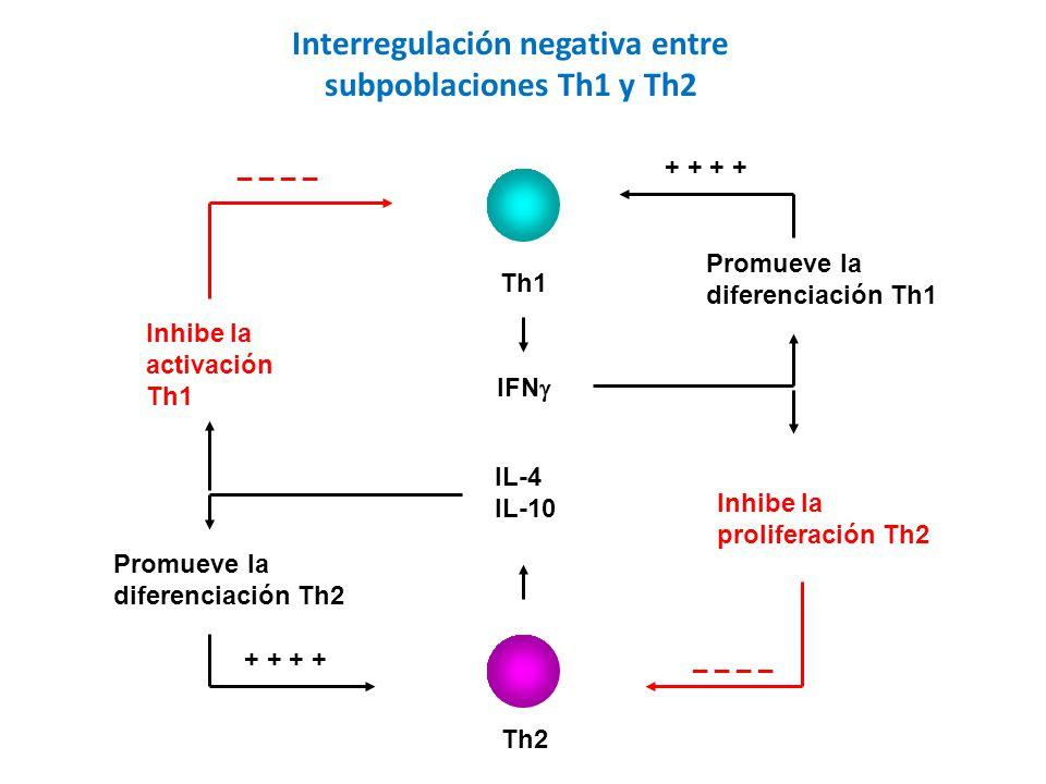 Th1 Th2 IL-4 IL-10 IFN Promueve la diferenciación Th1 + + Inhibe la proliferación Th2 _ _ Inhibe la activación Th1 _ _ Promueve la diferenciación Th2