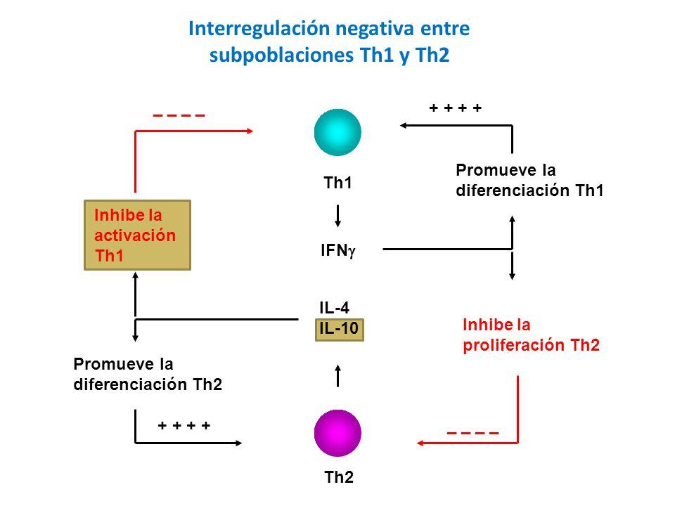 Th1 Th2 IL-4 IL-10 IFN Promueve la diferenciación Th1 + + Inhibe la proliferación Th2 _ _ Inhibe la activación Th1 _ _ Promueve la diferenciación Th2 + + Interregulación negativa entre subpoblaciones Th1 y Th2