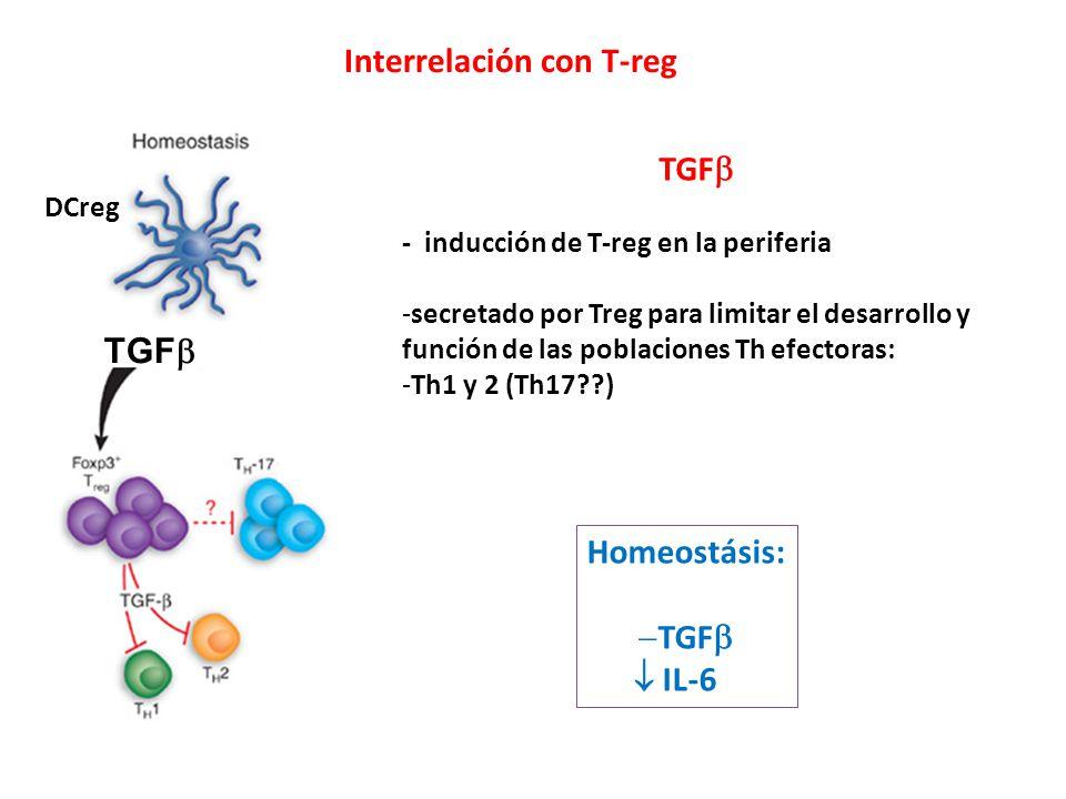 TGF DCreg TGF - inducción de T-reg en la periferia -secretado por Treg para limitar el desarrollo y función de las poblaciones Th efectoras: -Th1 y 2 (Th17??) Homeostásis: TGF IL-6 Interrelación con T-reg