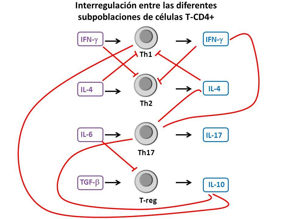 Th1 Th2 Th17 T-reg IFN- IL-4 IL-17 IL-10 IL-6 IL-4 IFN- TGF- Interregulación entre las diferentes subpoblaciones de células T-CD4+