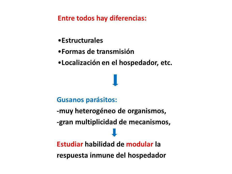 Entre todos hay diferencias: Estructurales Formas de transmisión Localización en el hospedador, etc. Gusanos parásitos: -muy heterogéneo de organismos