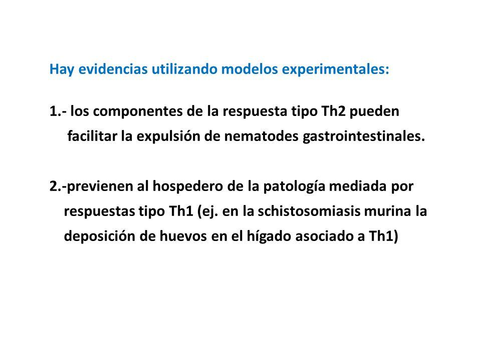Hay evidencias utilizando modelos experimentales: 1.- los componentes de la respuesta tipo Th2 pueden facilitar la expulsión de nematodes gastrointestinales.
