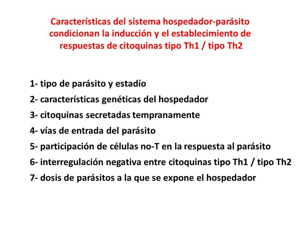 1- tipo de parásito y estadío 2- características genéticas del hospedador 3- citoquinas secretadas tempranamente 4- vías de entrada del parásito 5- participación de células no-T en la respuesta al parásito 6- interregulación negativa entre citoquinas tipo Th1 / tipo Th2 7- dosis de parásitos a la que se expone el hospedador Características del sistema hospedador-parásito condicionan la inducción y el establecimiento de respuestas de citoquinas tipo Th1 / tipo Th2