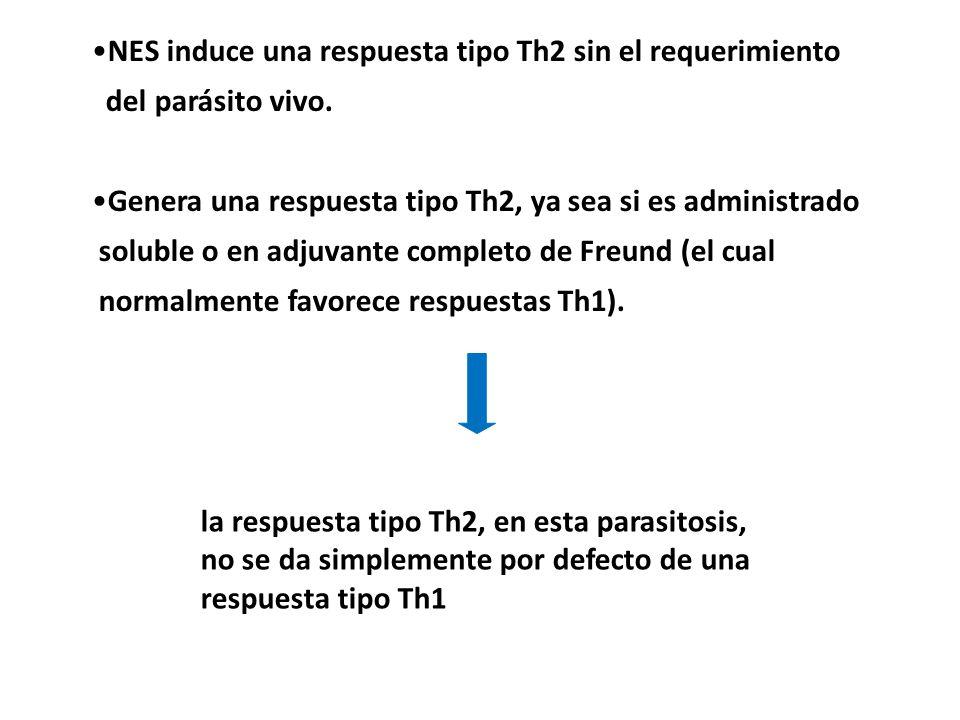 NES induce una respuesta tipo Th2 sin el requerimiento del parásito vivo. Genera una respuesta tipo Th2, ya sea si es administrado soluble o en adjuva
