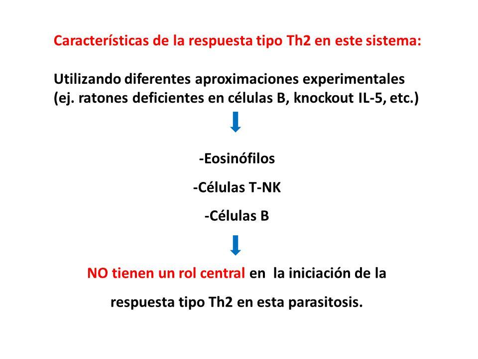 Características de la respuesta tipo Th2 en este sistema: Utilizando diferentes aproximaciones experimentales (ej. ratones deficientes en células B, k
