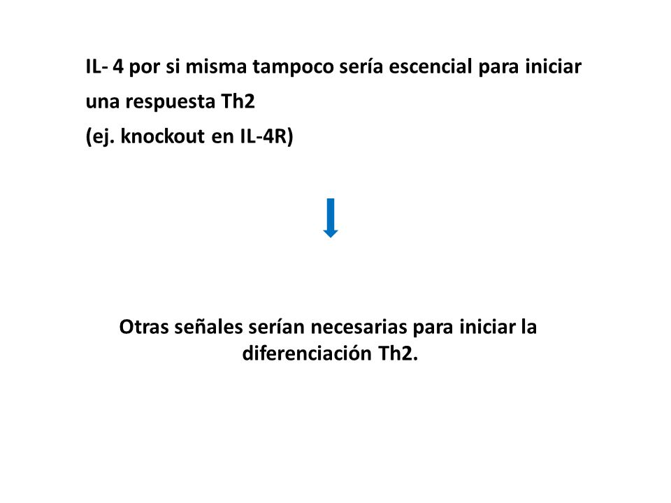 IL- 4 por si misma tampoco sería escencial para iniciar una respuesta Th2 (ej. knockout en IL-4R) Otras señales serían necesarias para iniciar la dife