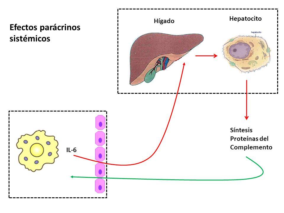 IL-6 Hígado Hepatocito Síntesis Proteínas del Complemento Efectos parácrinos sistémicos