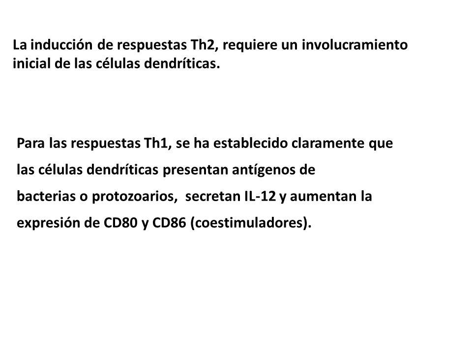 La inducción de respuestas Th2, requiere un involucramiento inicial de las células dendríticas. Para las respuestas Th1, se ha establecido claramente