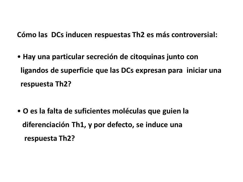 Cómo las DCs inducen respuestas Th2 es más controversial: Hay una particular secreción de citoquinas junto con ligandos de superficie que las DCs expr