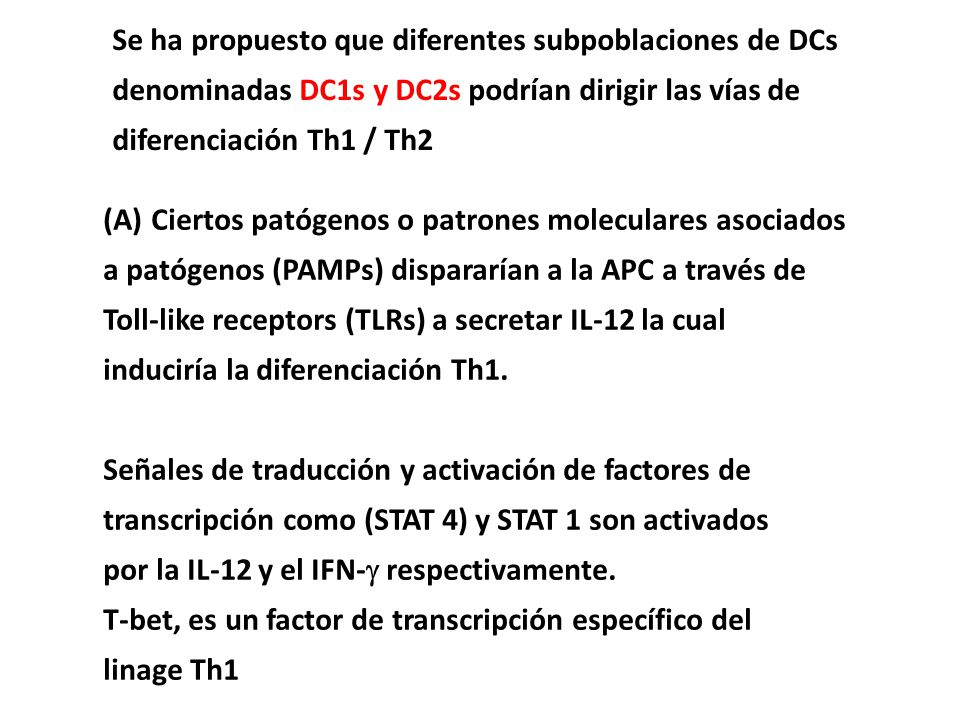 Se ha propuesto que diferentes subpoblaciones de DCs denominadas DC1s y DC2s podrían dirigir las vías de diferenciación Th1 / Th2 (A)Ciertos patógenos o patrones moleculares asociados a patógenos (PAMPs) dispararían a la APC a través de Toll-like receptors (TLRs) a secretar IL-12 la cual induciría la diferenciación Th1.
