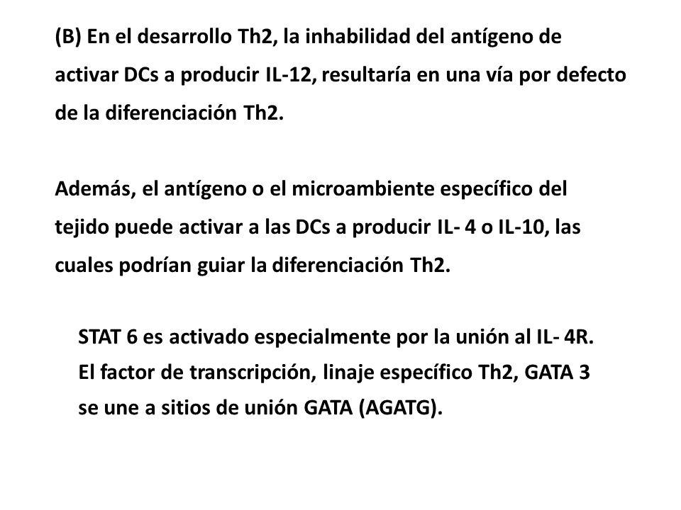 (B) En el desarrollo Th2, la inhabilidad del antígeno de activar DCs a producir IL-12, resultaría en una vía por defecto de la diferenciación Th2. Ade