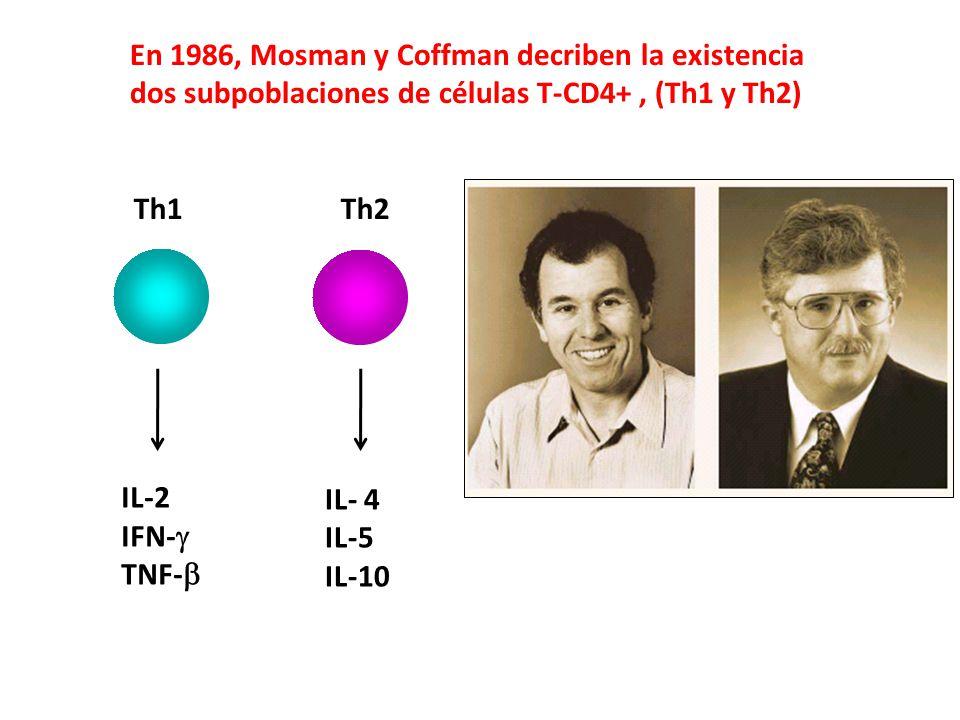 En 1986, Mosman y Coffman decriben la existencia dos subpoblaciones de células T-CD4+, (Th1 y Th2) Th1 Th2 IL-2 IFN- TNF- IL- 4 IL-5 IL-10