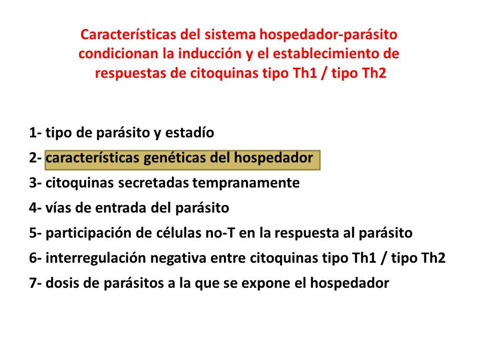 Características del sistema hospedador-parásito condicionan la inducción y el establecimiento de respuestas de citoquinas tipo Th1 / tipo Th2 1- tipo de parásito y estadío 2- características genéticas del hospedador 3- citoquinas secretadas tempranamente 4- vías de entrada del parásito 5- participación de células no-T en la respuesta al parásito 6- interregulación negativa entre citoquinas tipo Th1 / tipo Th2 7- dosis de parásitos a la que se expone el hospedador