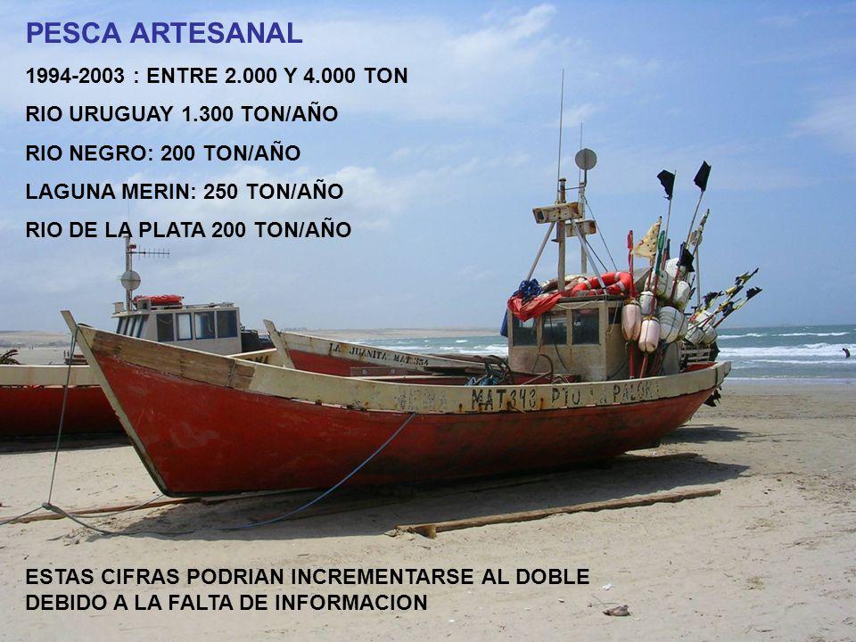 PESCA ARTESANAL 1994-2003 : ENTRE 2.000 Y 4.000 TON RIO URUGUAY 1.300 TON/AÑO RIO NEGRO: 200 TON/AÑO LAGUNA MERIN: 250 TON/AÑO RIO DE LA PLATA 200 TON/AÑO ESTAS CIFRAS PODRIAN INCREMENTARSE AL DOBLE DEBIDO A LA FALTA DE INFORMACION