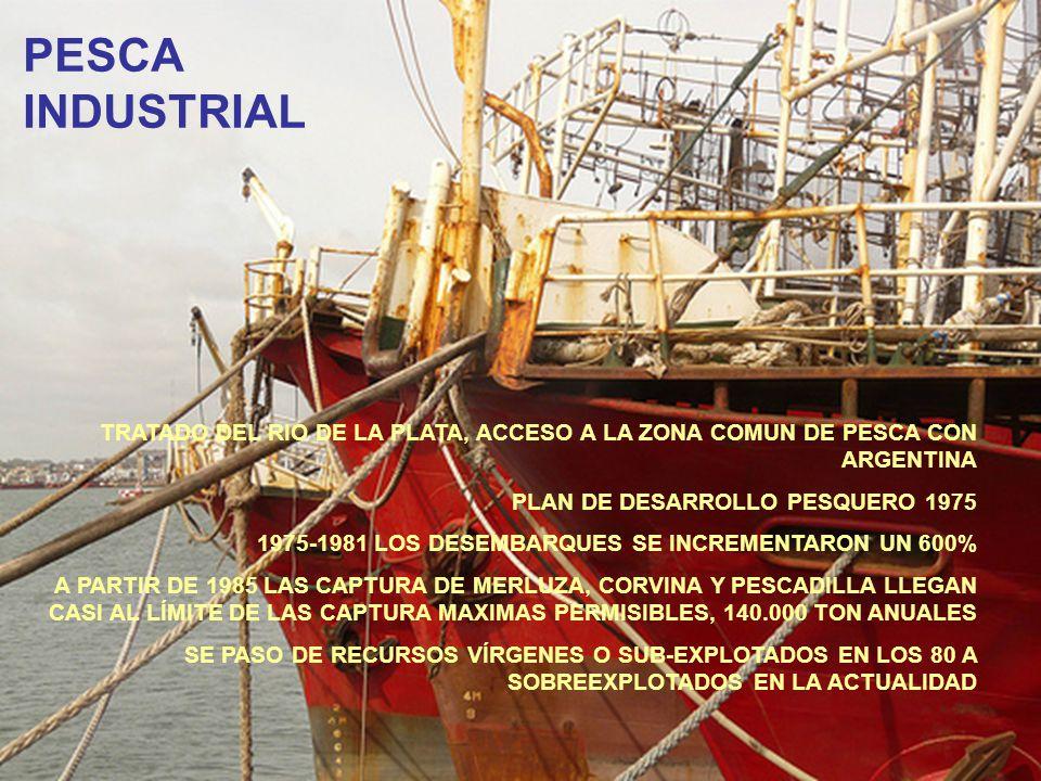 TRATADO DEL RIO DE LA PLATA, ACCESO A LA ZONA COMUN DE PESCA CON ARGENTINA PLAN DE DESARROLLO PESQUERO 1975 1975-1981 LOS DESEMBARQUES SE INCREMENTARO