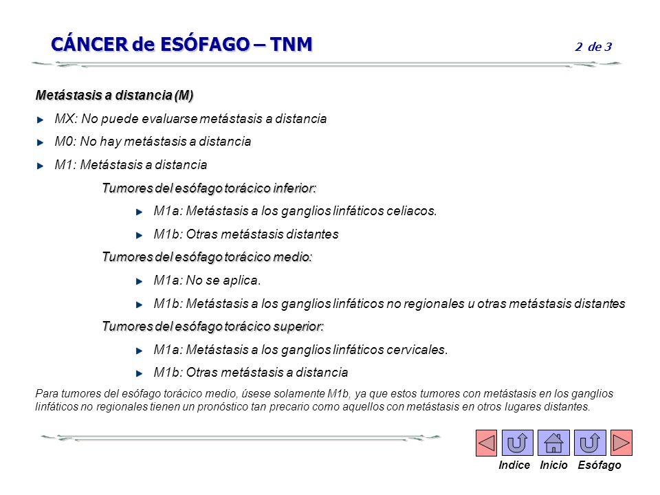CÁNCER de ESÓFAGO – TNM CÁNCER de ESÓFAGO – TNM 2 de 3 Metástasis a distancia (M) MX: No puede evaluarse metástasis a distancia M0: No hay metástasis
