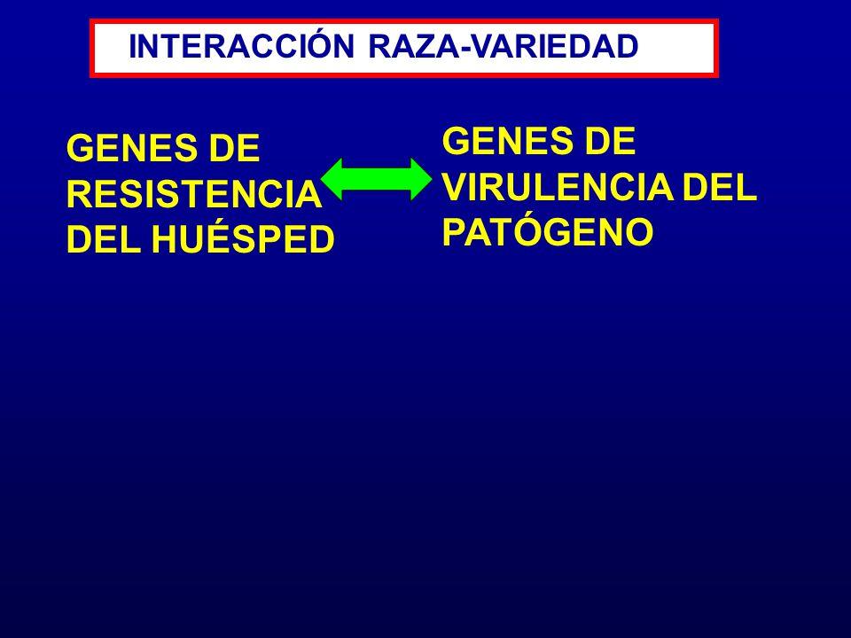 GENES DE RESISTENCIA DEL HUÉSPED INTERACCIÓN RAZA-VARIEDAD GENES DE VIRULENCIA DEL PATÓGENO