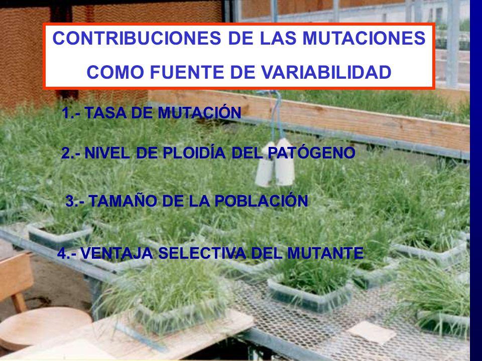 CONTRIBUCIONES DE LAS MUTACIONES COMO FUENTE DE VARIABILIDAD 1.- TASA DE MUTACIÓN 2.- NIVEL DE PLOIDÍA DEL PATÓGENO 3.- TAMAÑO DE LA POBLACIÓN 4.- VEN