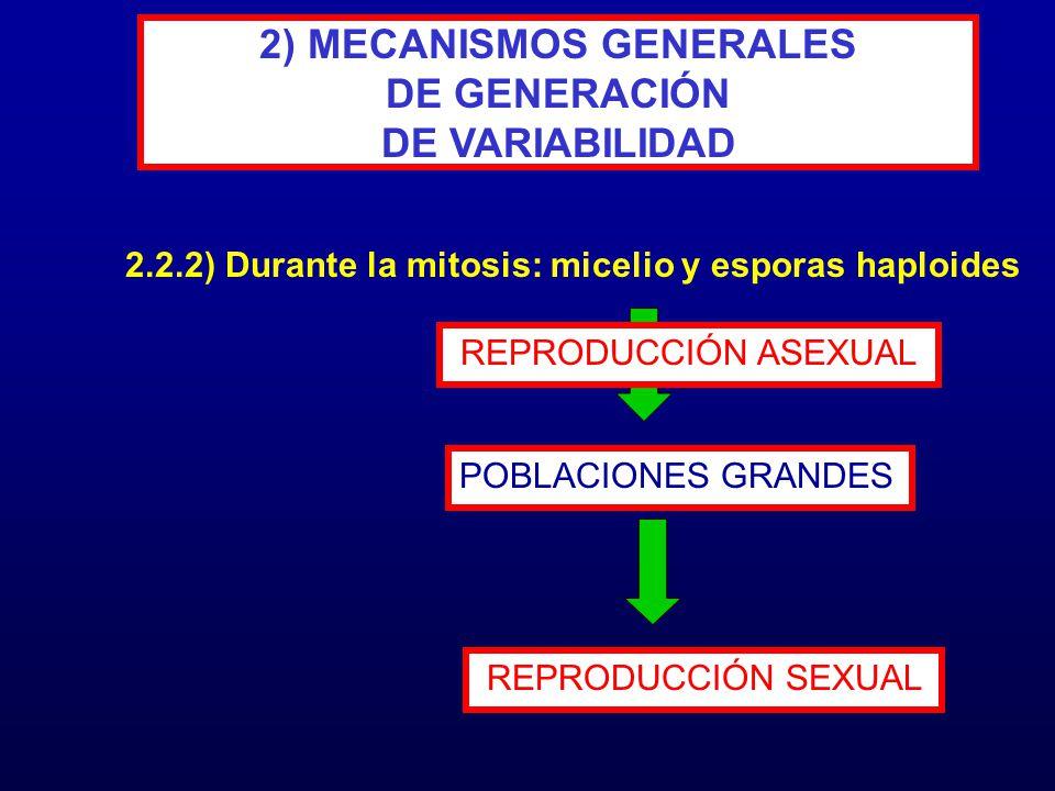 2.2.2) Durante la mitosis: micelio y esporas haploides 2) MECANISMOS GENERALES DE GENERACIÓN DE VARIABILIDAD POBLACIONES GRANDES REPRODUCCIÓN ASEXUAL