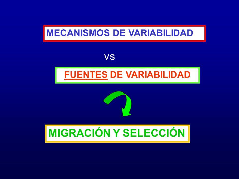 FUENTES DE VARIABILIDAD MECANISMOS DE VARIABILIDAD MIGRACIÓN Y SELECCIÓN vs