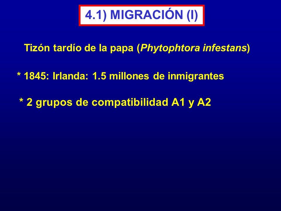 4.1) MIGRACIÓN (I) * 1845: Irlanda: 1.5 millones de inmigrantes * 2 grupos de compatibilidad A1 y A2 Tizón tardío de la papa (Phytophtora infestans)