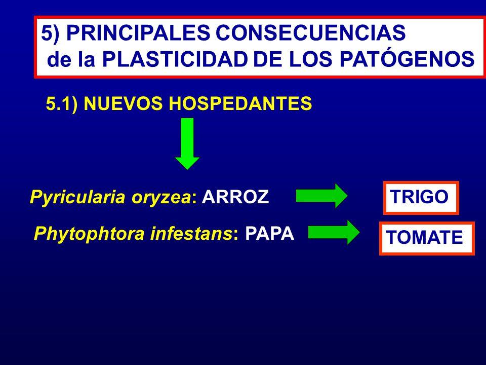 5.1) NUEVOS HOSPEDANTES 5) PRINCIPALES CONSECUENCIAS de la PLASTICIDAD DE LOS PATÓGENOS Pyricularia oryzea: ARROZ TRIGO Phytophtora infestans: PAPA TO