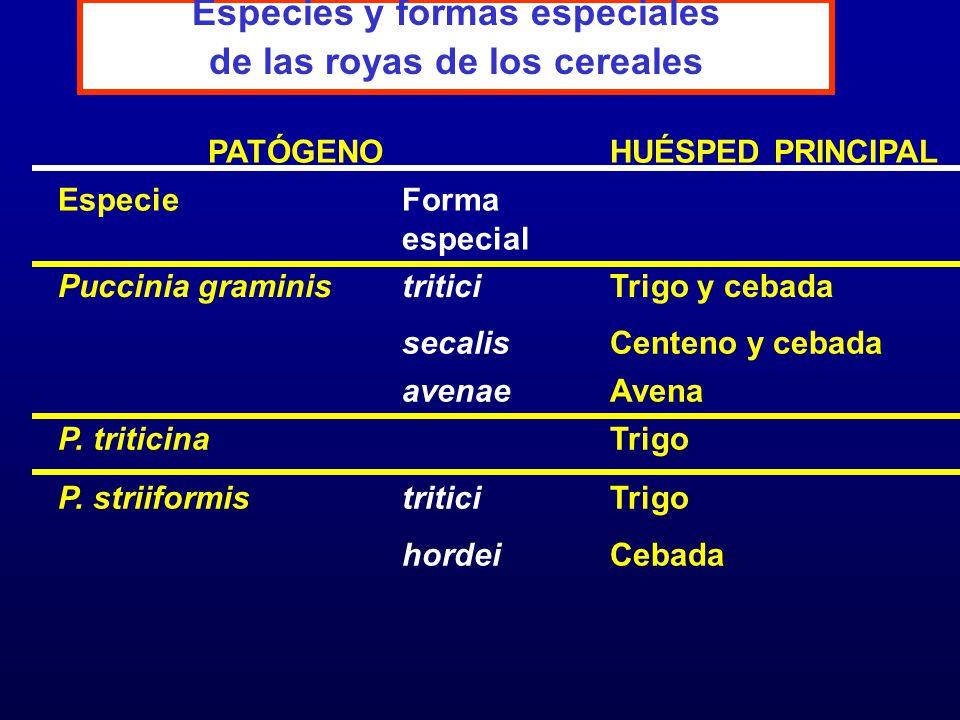 4.2) SELECCIÓN B) VARIEDADES SUSCEPTIBLES OCUPANDO CRECIENTES SUPERFICIES QUIEBRE DE VARIEDADES RESISTENTES ALTA PRODUCCIÓN DE INÓCULO MUTACIONES