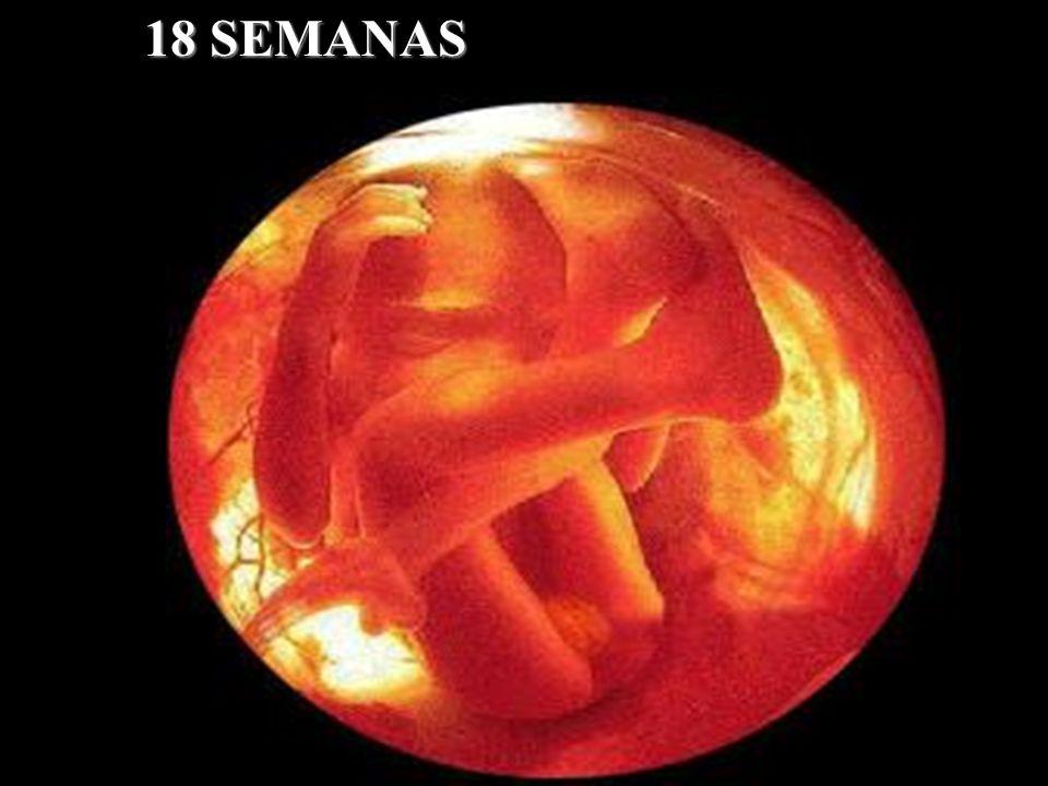 18 SEMANAS