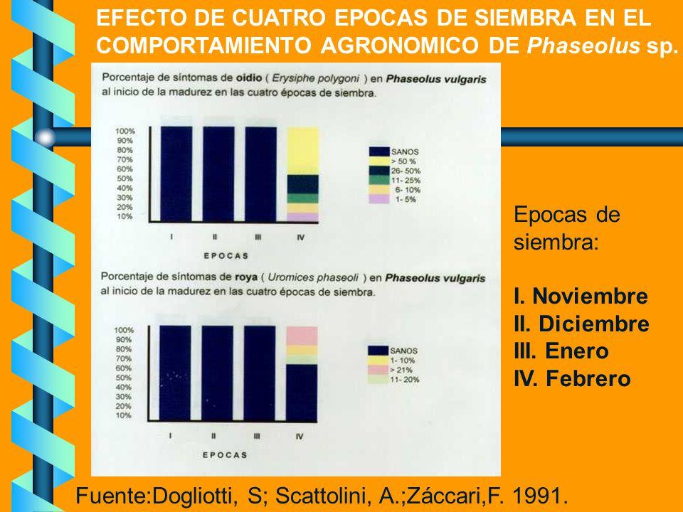 Epocas de siembra: I. Noviembre II. Diciembre III. Enero IV. Febrero Fuente:Dogliotti, S; Scattolini, A.;Záccari,F. 1991. EFECTO DE CUATRO EPOCAS DE S