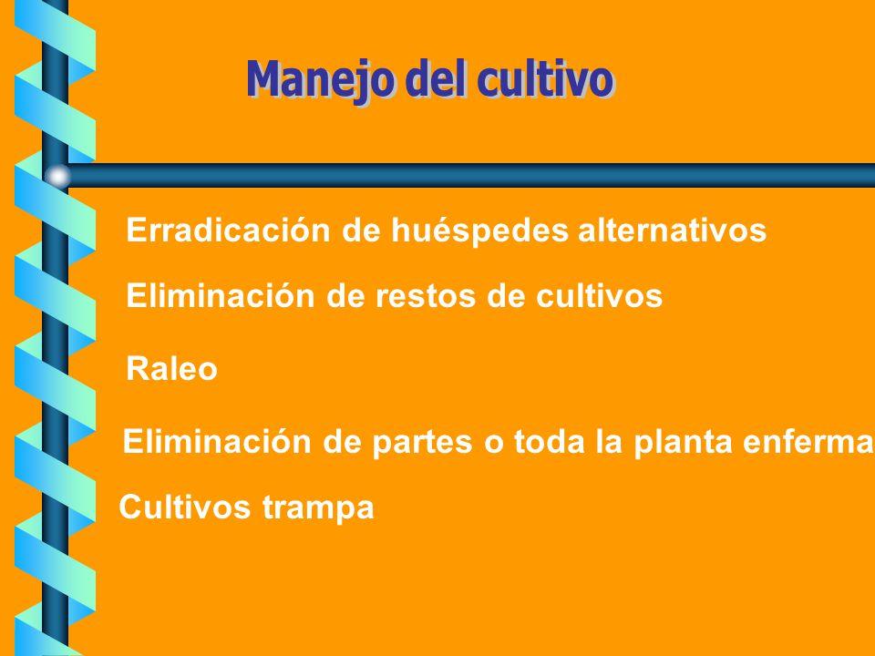 Erradicación de huéspedes alternativos Eliminación de restos de cultivos Eliminación de partes o toda la planta enferma Raleo Cultivos trampa