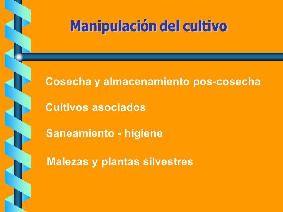 Cosecha y almacenamiento pos-cosecha Cultivos asociados Saneamiento - higiene Malezas y plantas silvestres