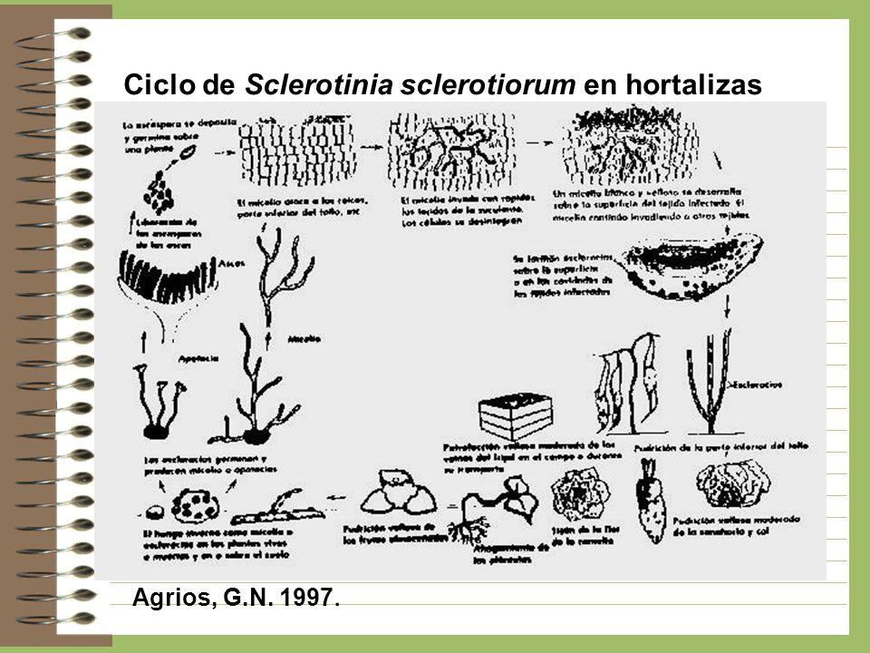 Ciclo de Sclerotinia sclerotiorum en hortalizas Agrios, G.N. 1997.