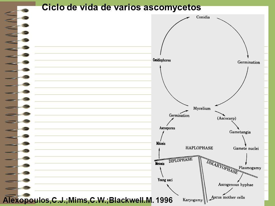 Ciclo de vida de varios ascomycetos Alexopoulos,C.J.;Mims,C.W.;Blackwell.M. 1996