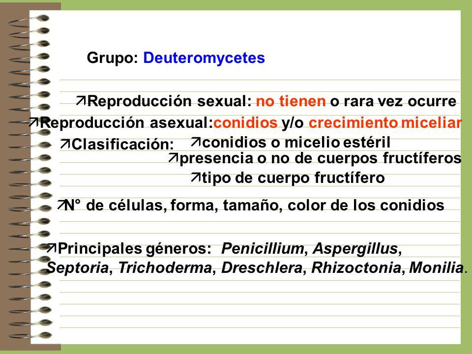 Grupo: Deuteromycetes ä Reproducción sexual: no tienen o rara vez ocurre ä Reproducción asexual:conidios y/o crecimiento miceliar ä Clasificación: ä c