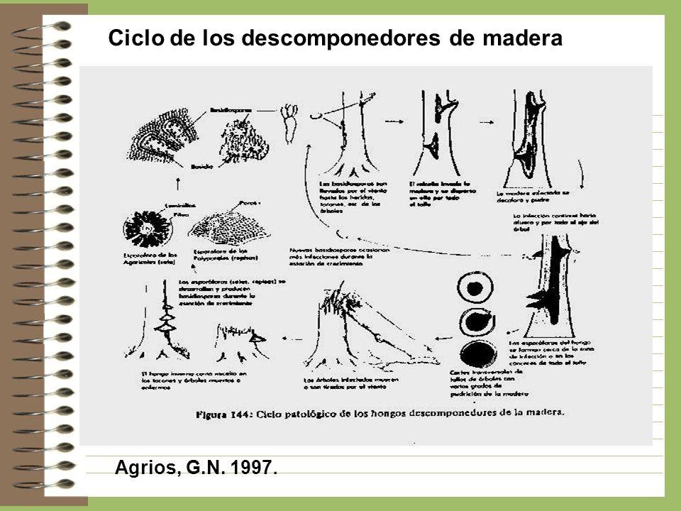 Ciclo de los descomponedores de madera Agrios, G.N. 1997.