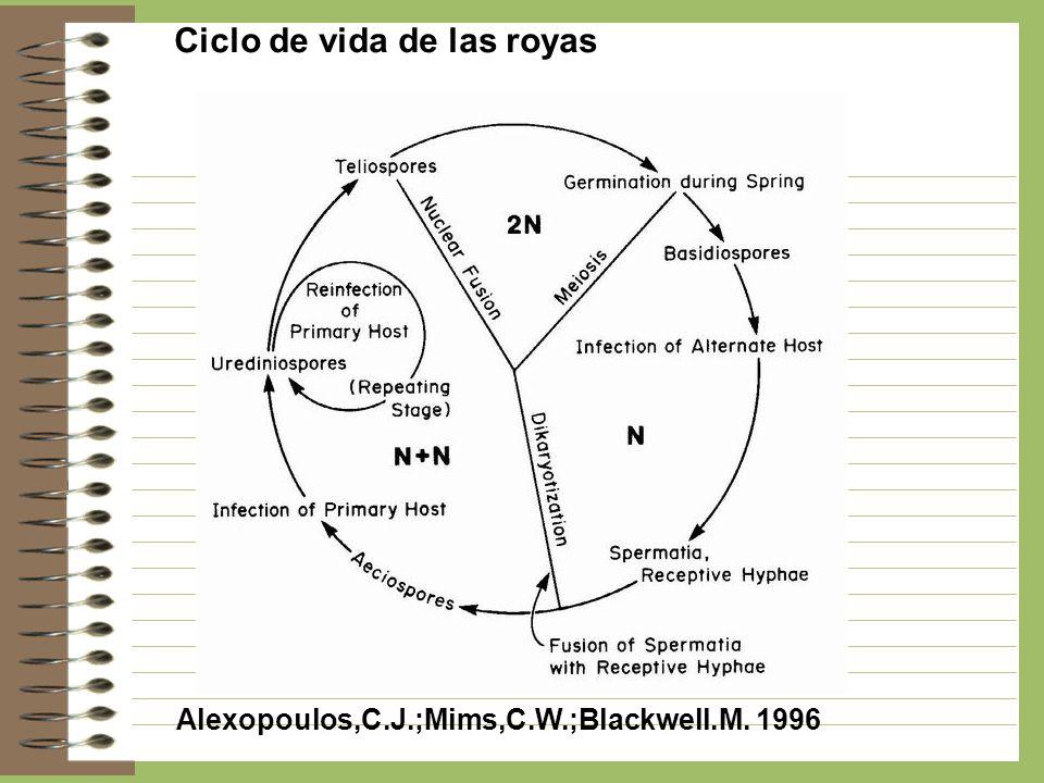 Ciclo de vida de las royas Alexopoulos,C.J.;Mims,C.W.;Blackwell.M. 1996
