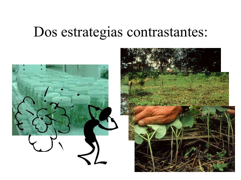 Análisis del agroecosistema + vulnerable: monocultivo, clones alto N dependencia de productos químicos Menos vulnerable: diversidad: cultivos, genes de resistencia, períodos de cultivo.